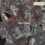 Aton Forest